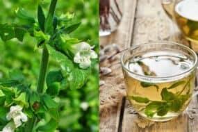 Μελισσόχορτο: Ένα μαγικό βότανο της φύσης