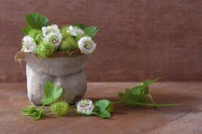 Πασιφλόρα: Ένα αγχολυτικό λουλούδι της φύσης