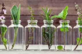 Τα καλύτερα βότανα για ηρεμία και ευεξία