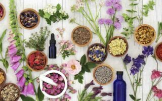 Τα καλύτερα και πιο δημοφιλή βότανα παγκοσμίως