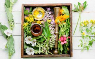 Ποια είναι τα 10 καλύτερα βότανα για τις γυναίκες