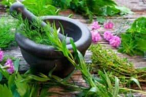 Βιβούρνο: Ένα βότανο γεμάτο οφέλη