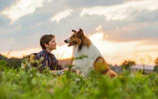 """""""Λάσι, γύρνα σπίτι"""": Ο διασημότερος σκύλος του κινηματογράφου κάνει πρεμιέρα"""